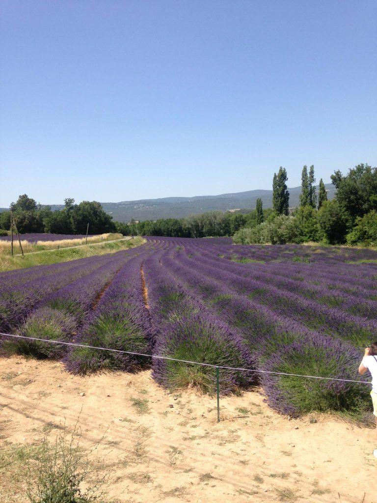フランスで最も美しい村のラベンダー畑