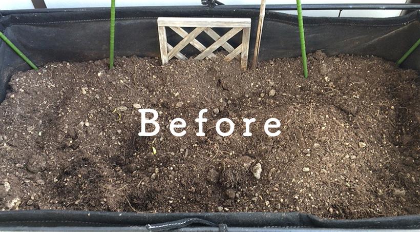 家庭菜園の土before