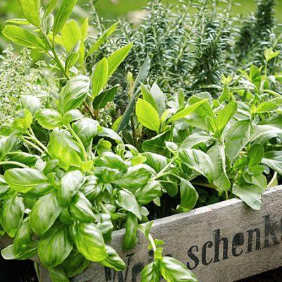 【初心者向け】簡単に育てられる冬のベランダ家庭菜園7選い。