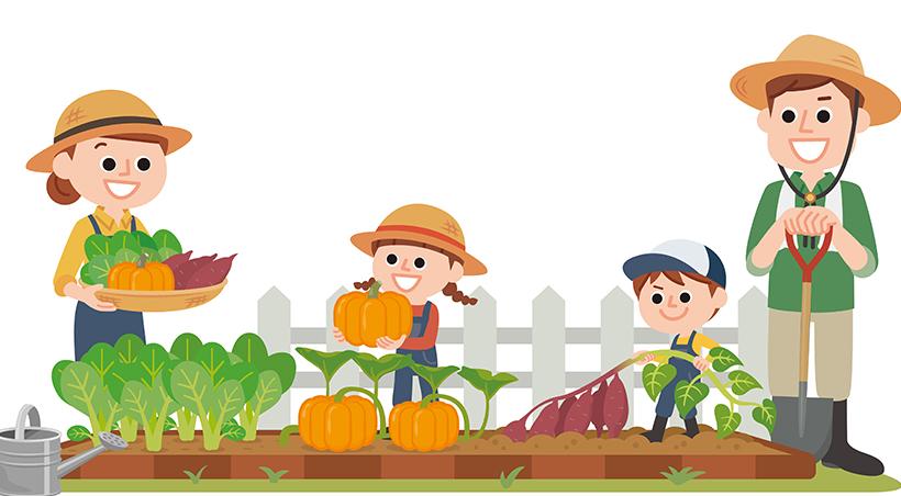 ベランダ家庭菜園